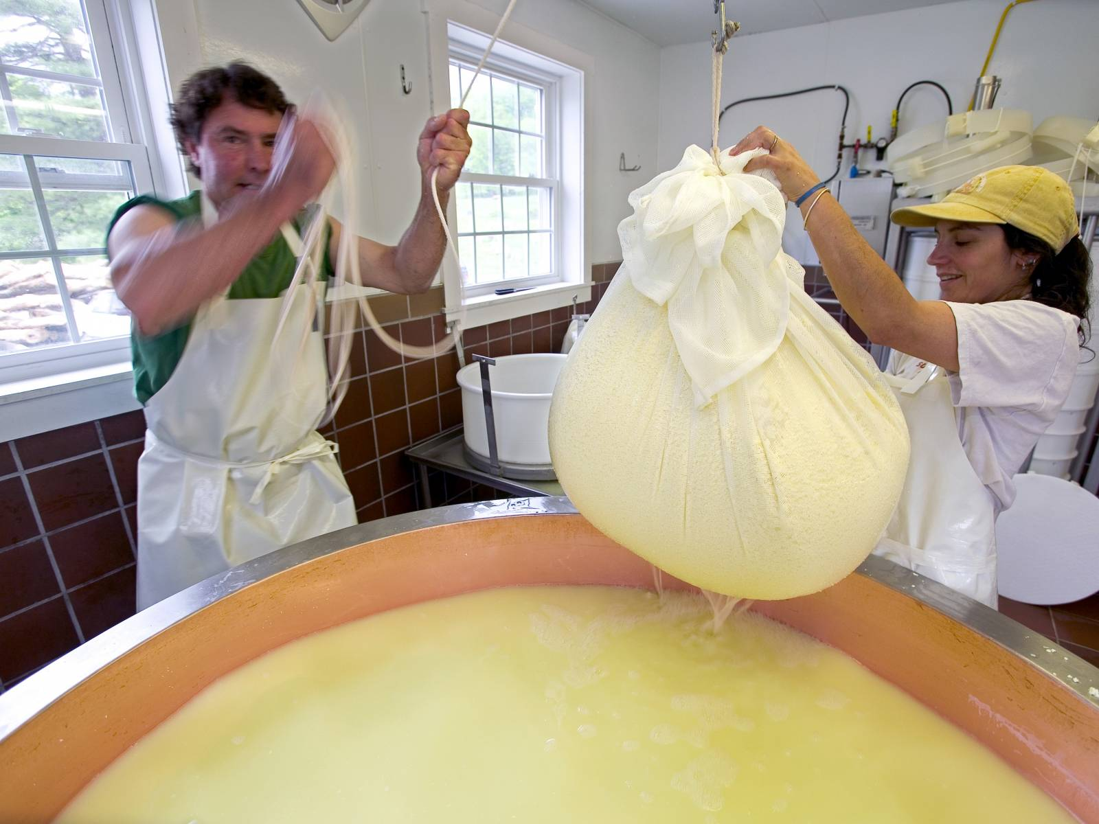 Two workers making organic cheese