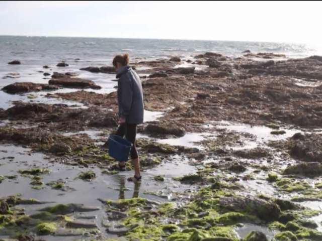 Mary walks along the shoreline, collecting seaweed.