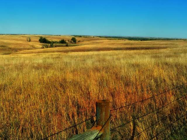 A gold-colored Nebraska field with a clear, blue sky. Pixabay photo