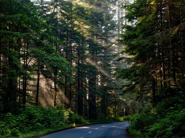 A road cuts through a deep and lovely pine forest in California. Pixabay photo