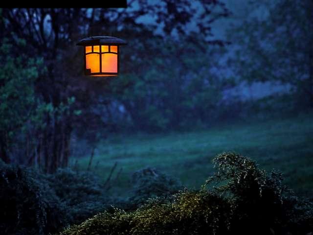 A lantern hangs in a tree in a field on a verdant summer night.
