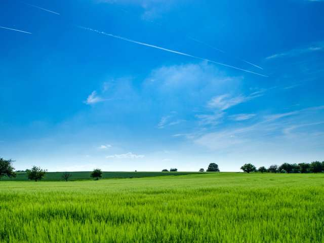 A green field in the foreground, as seen under a bright blue sky during summer.