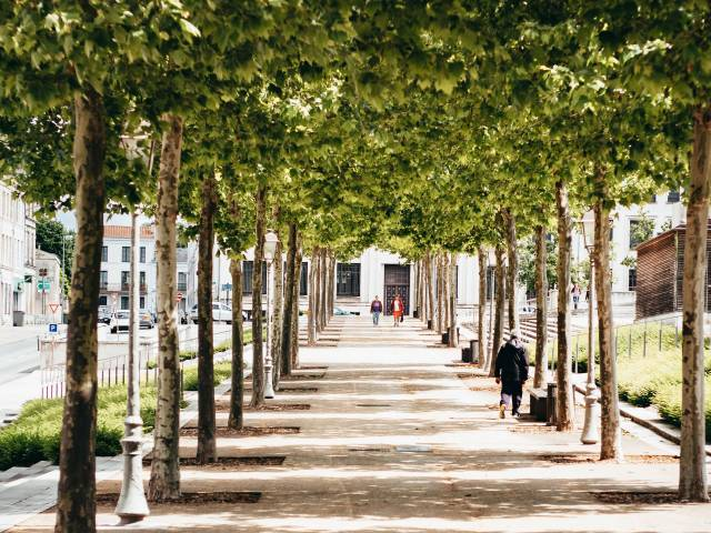 An avenue of trees and a central sidewalk during the summertime.