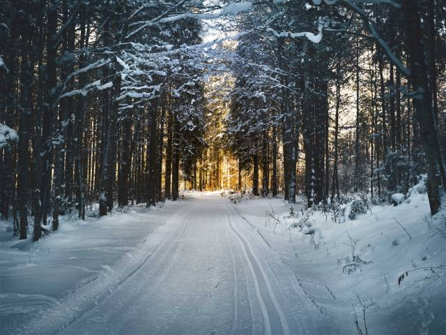 A snowy road with dark pines on either side of a single lane.