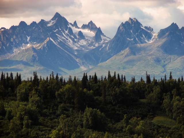 A scenic view of Alaska's jagged, snow-covered mountains with a pine forest.