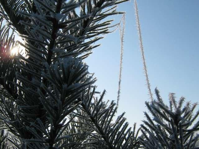 Christmas Tree Shopping, 2009. Photo by Glenn Fleishman.