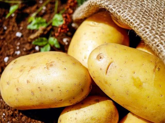 Potatoes in a burlap sack.