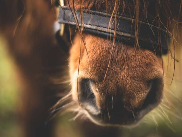 A close up photo of a horse and its whiskers.