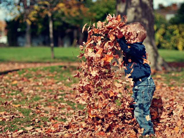 A young boy plays in the leaves, throwing them up in the air.