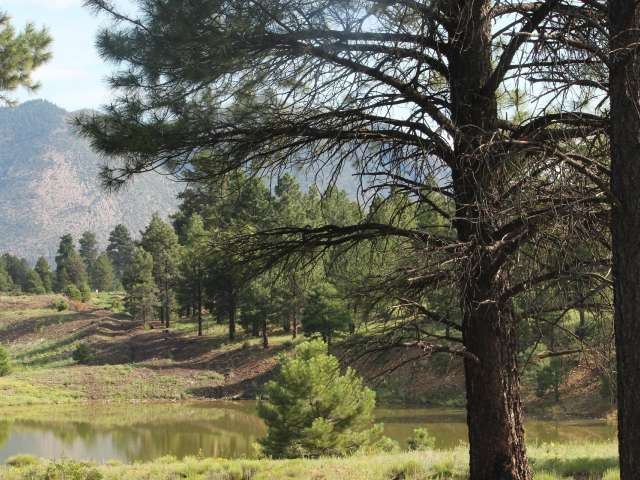 A scenic view of pines and mountains from Flagstaff. Stock photo